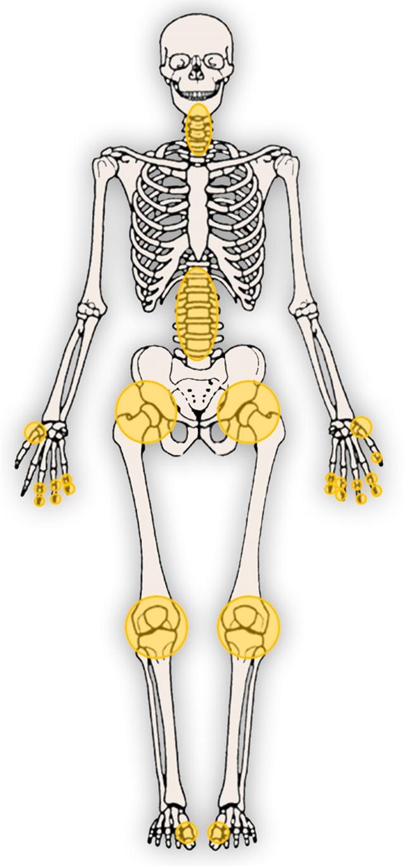 Berühmt Definieren Vas Deferens Ideen - Anatomie Ideen - finotti.info