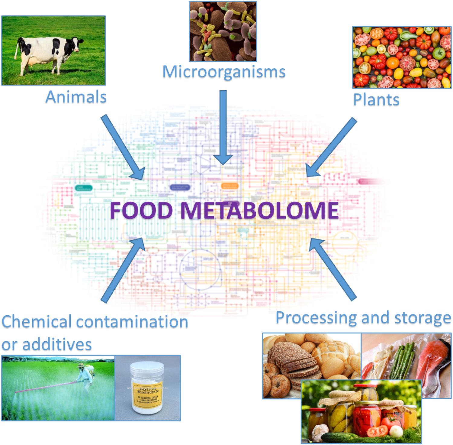 Mass spectrometry-based metabolomics of volatiles as a new tool for