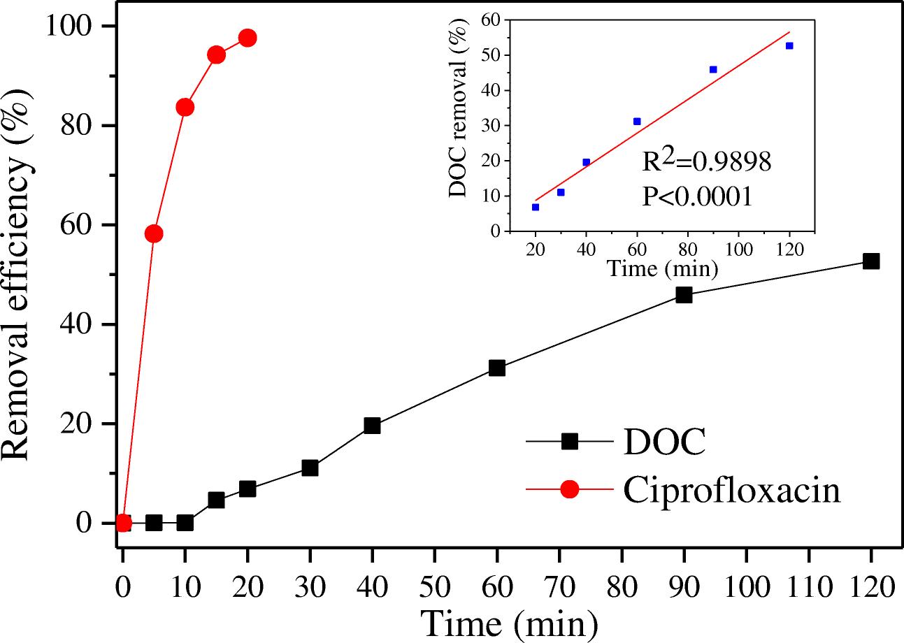 Electrochemical degradation of ciprofloxacin on BDD anode