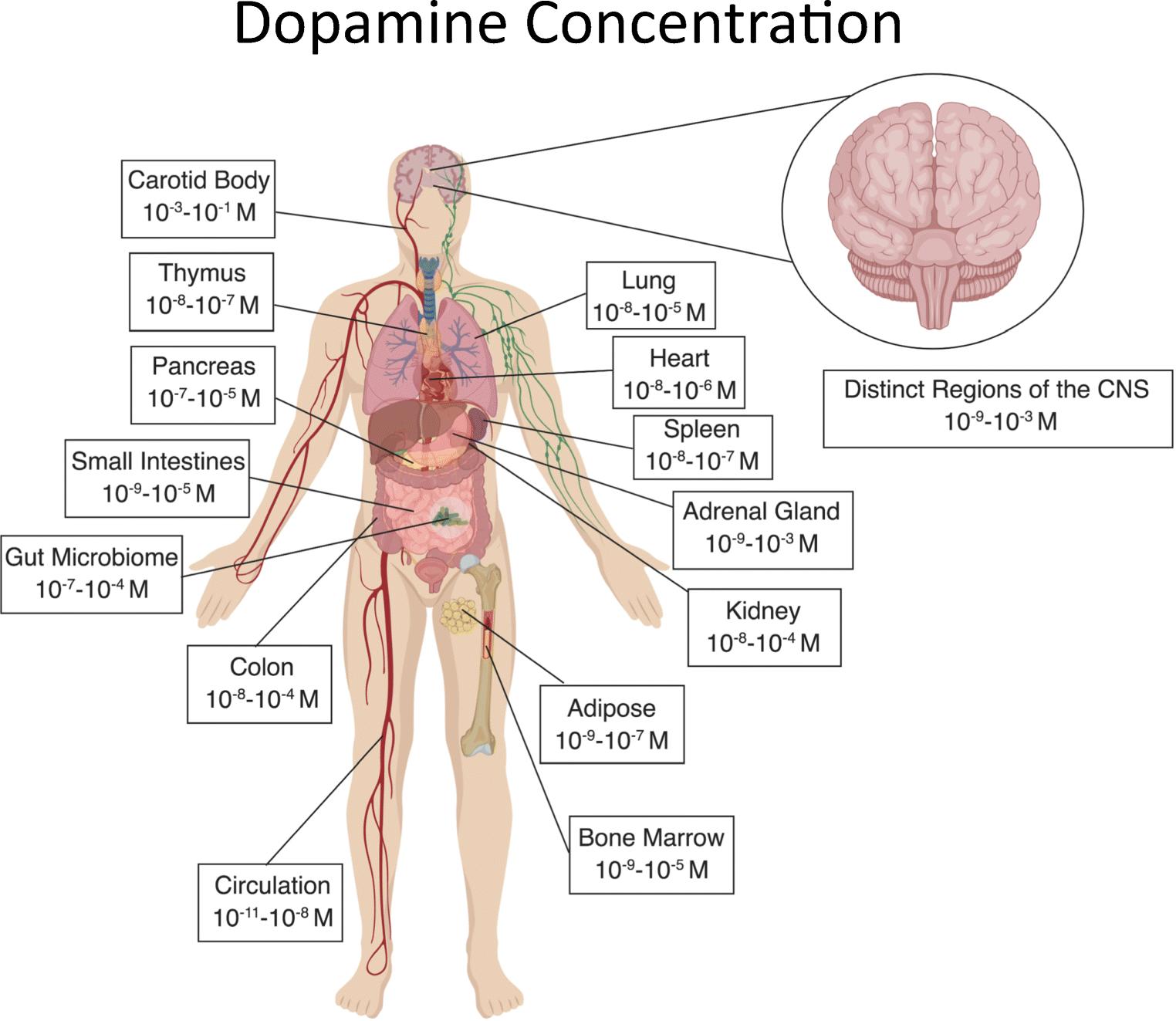 mat med dopamin