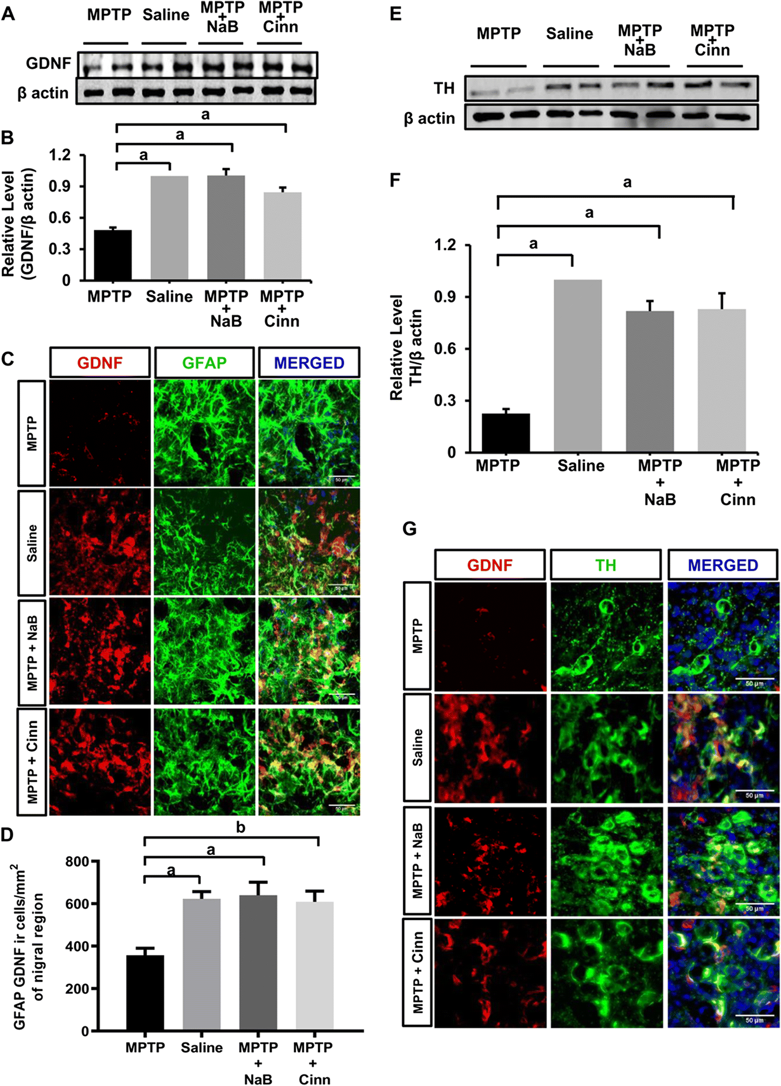 Cinnamon and its Metabolite Protect the Nigrostriatum in a