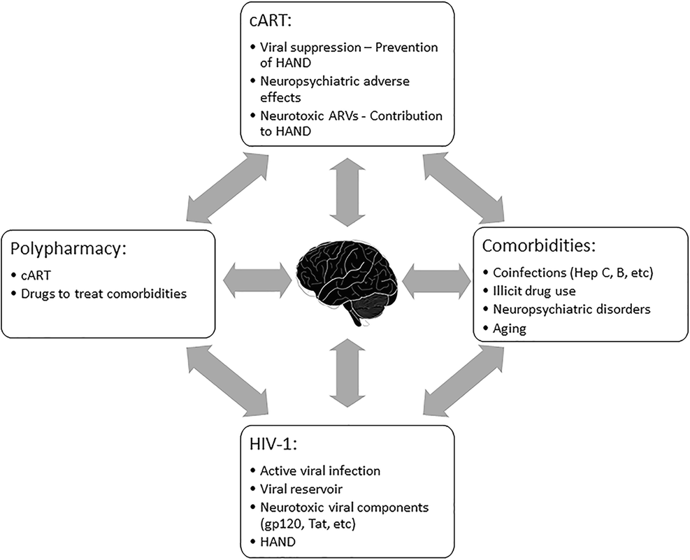 Beneficial and Adverse Effects of cART Affect Neurocognitive