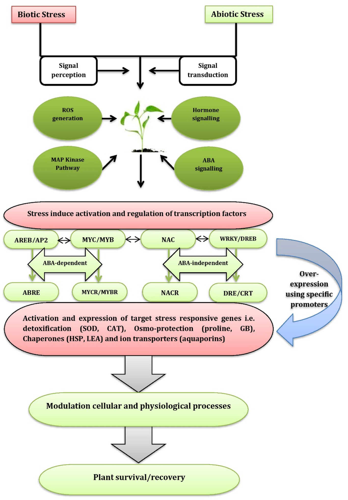 Recent advancement in modern genomic tools for adaptation of