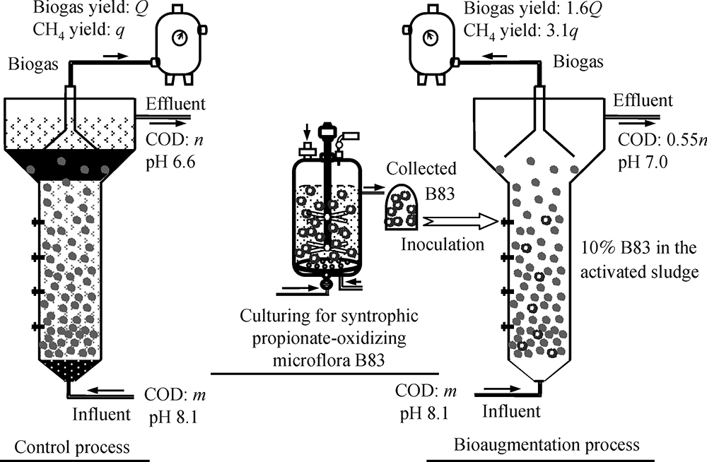 A syntrophic propionate-oxidizing microflora and its