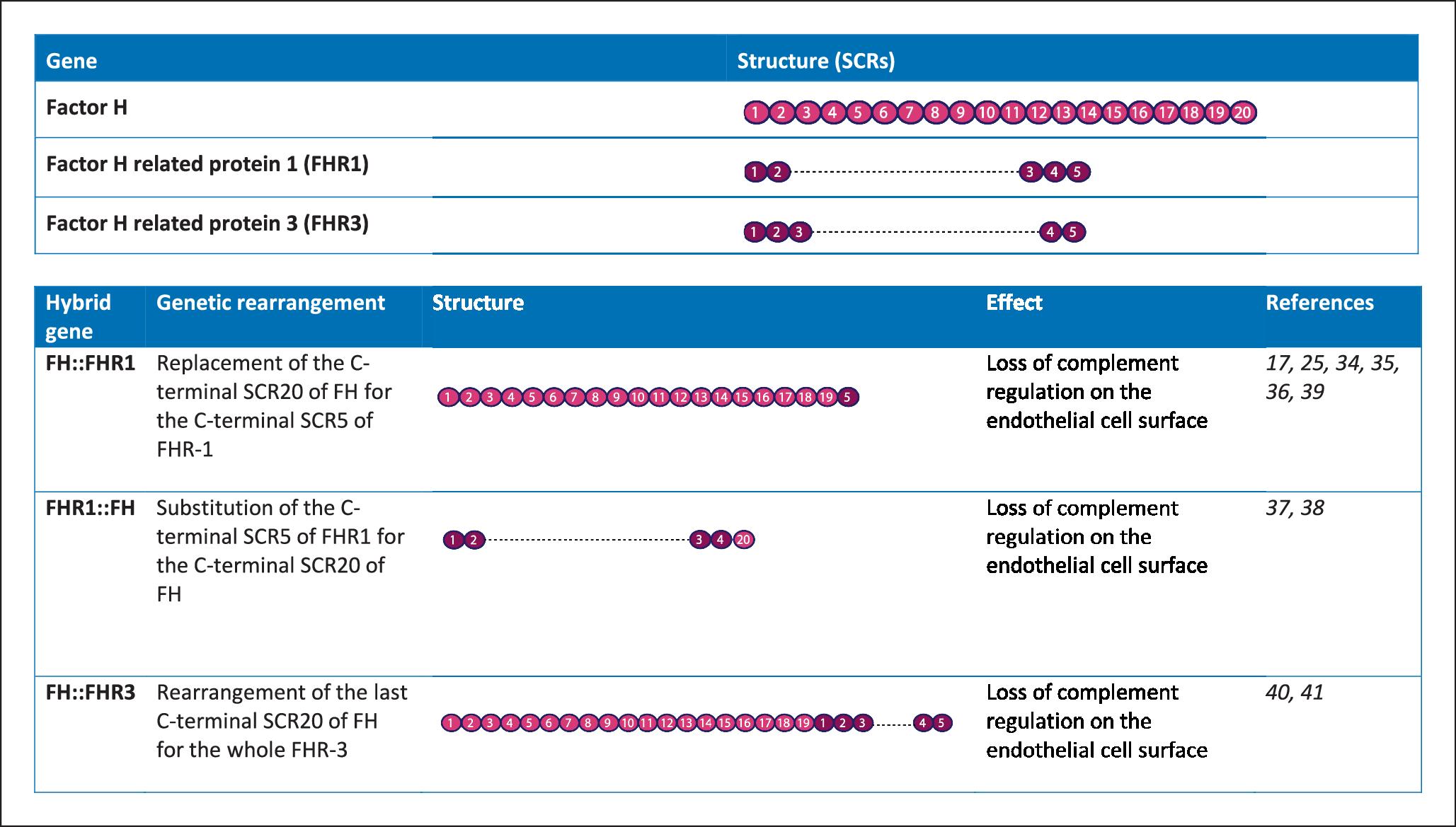 The genetics of atypical hemolytic uremic syndrome