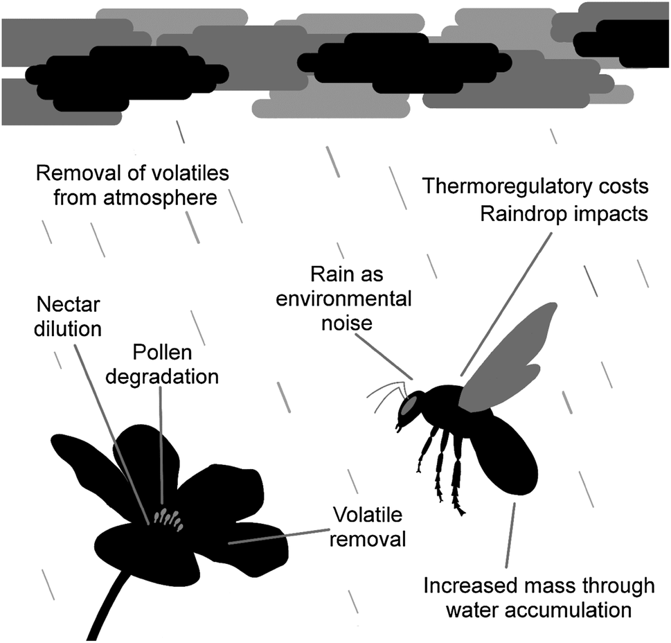 The effects of rainfall on plant–pollinator interactions