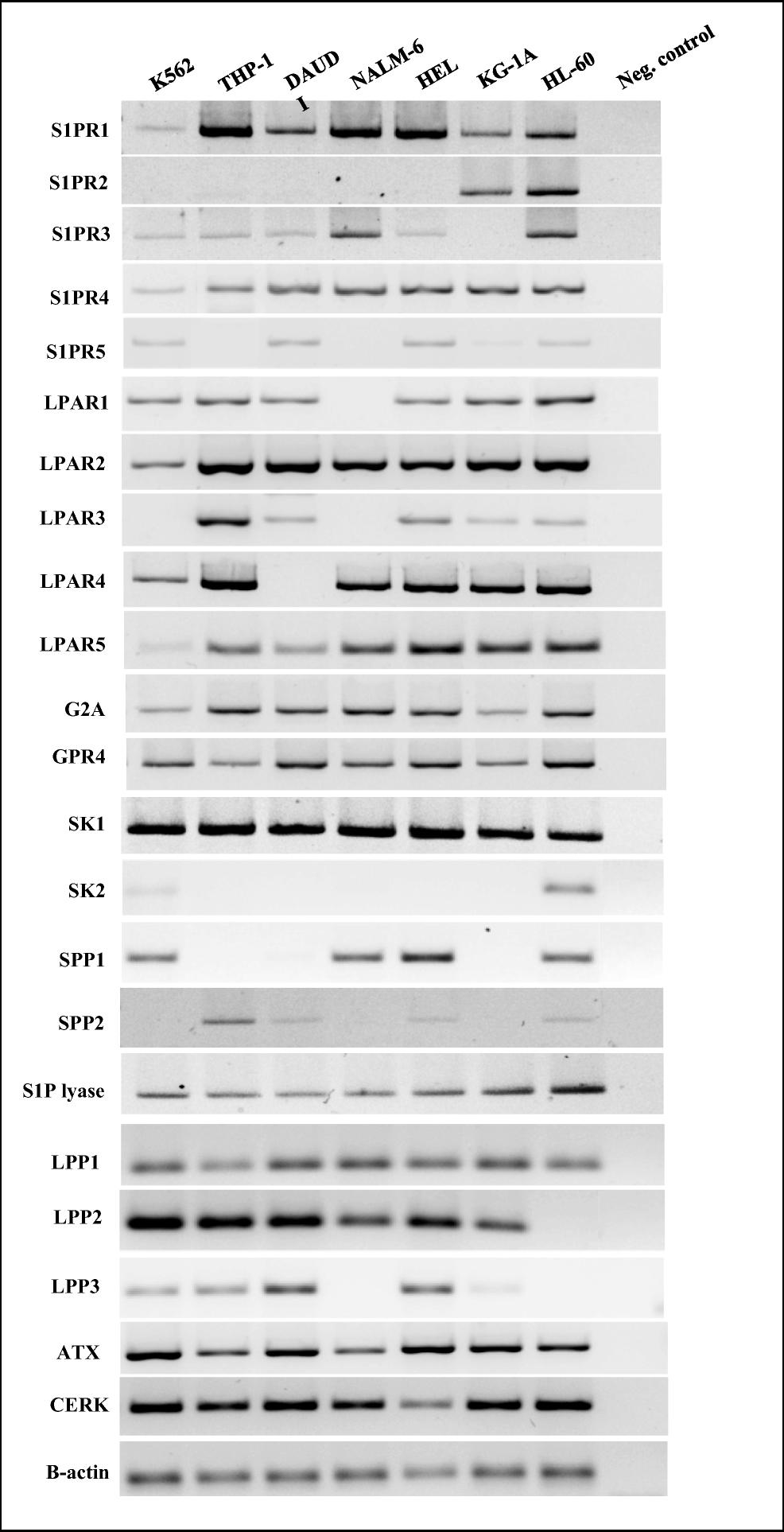 Bioactive Phospholipids Enhance Migration and Adhesion of
