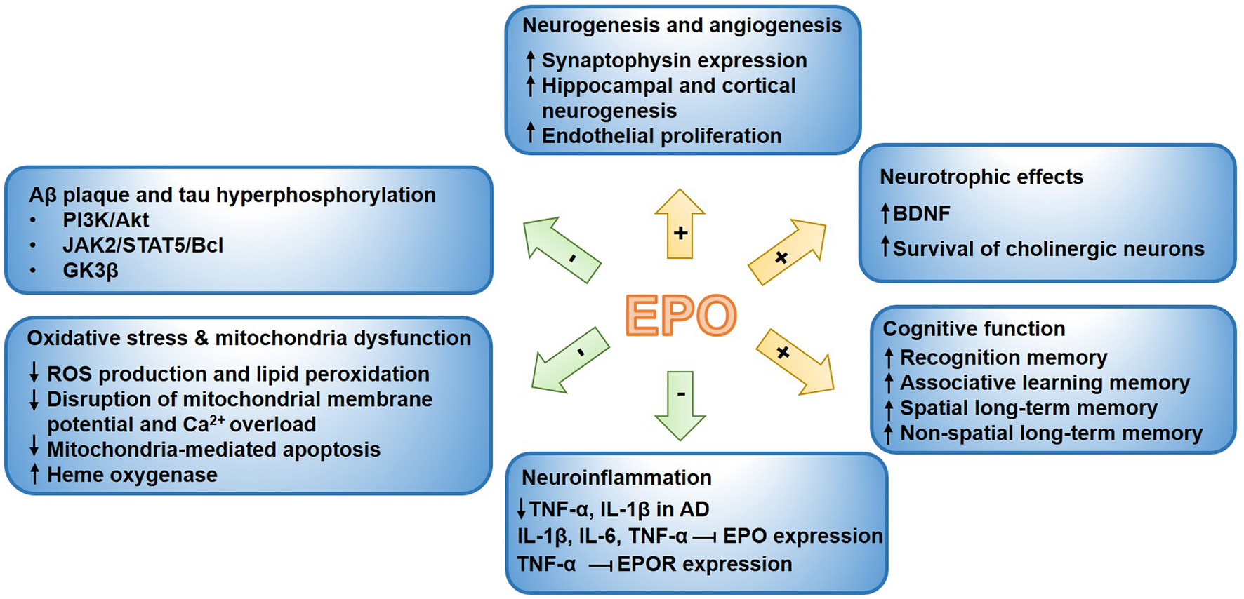 The Promises and Challenges of Erythropoietin for Treatment