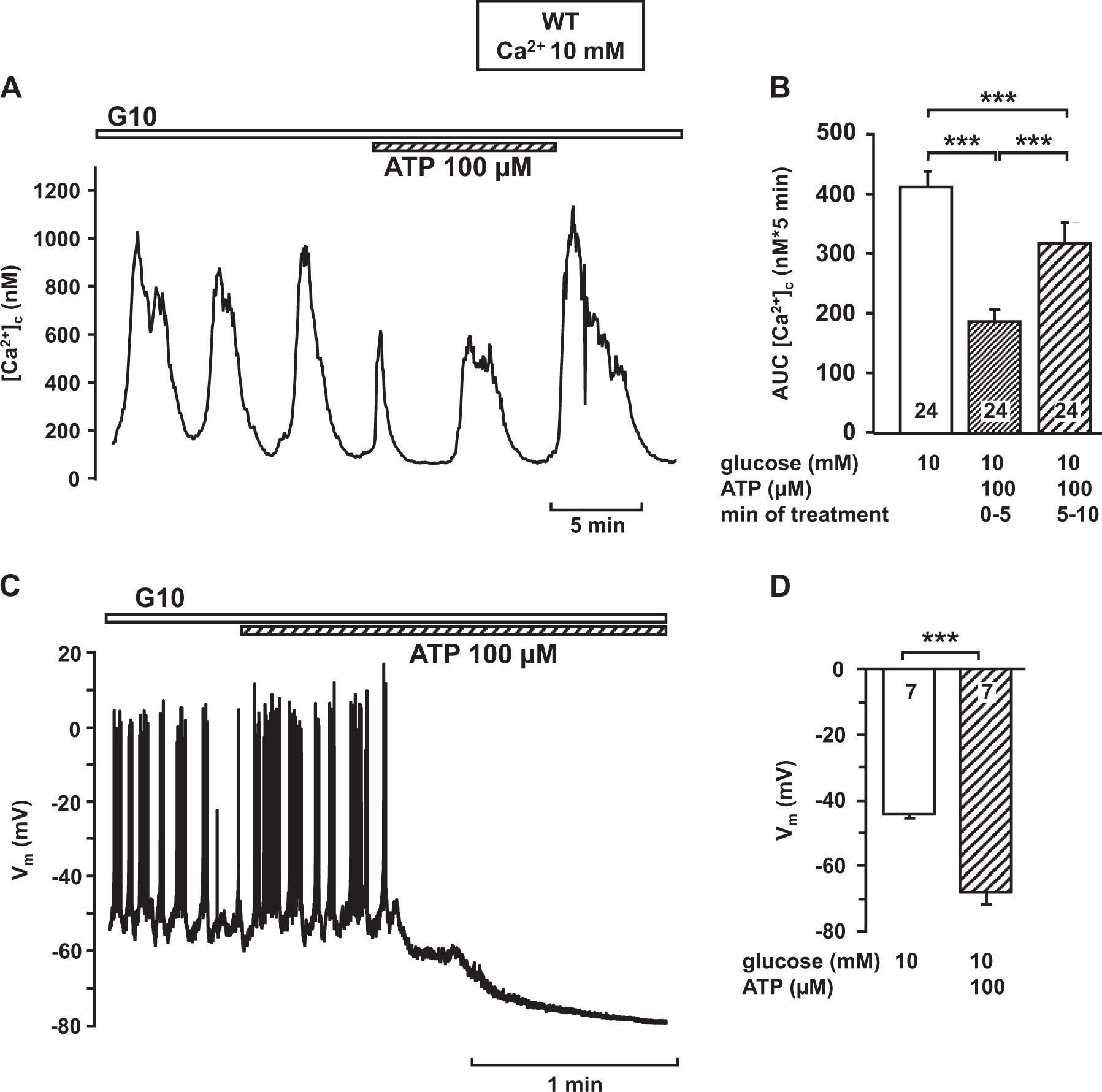 ATP mediates a negative autocrine signal on stimulus-secretion