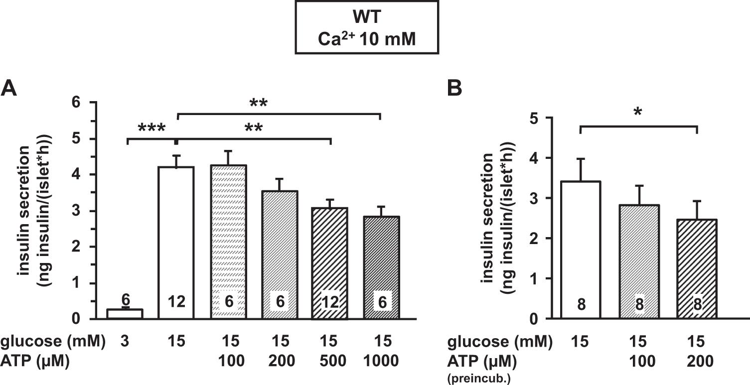 ATP mediates a negative autocrine signal on stimulus