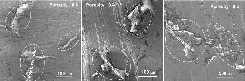 Properties of biocomposites based on titanium scaffolds with