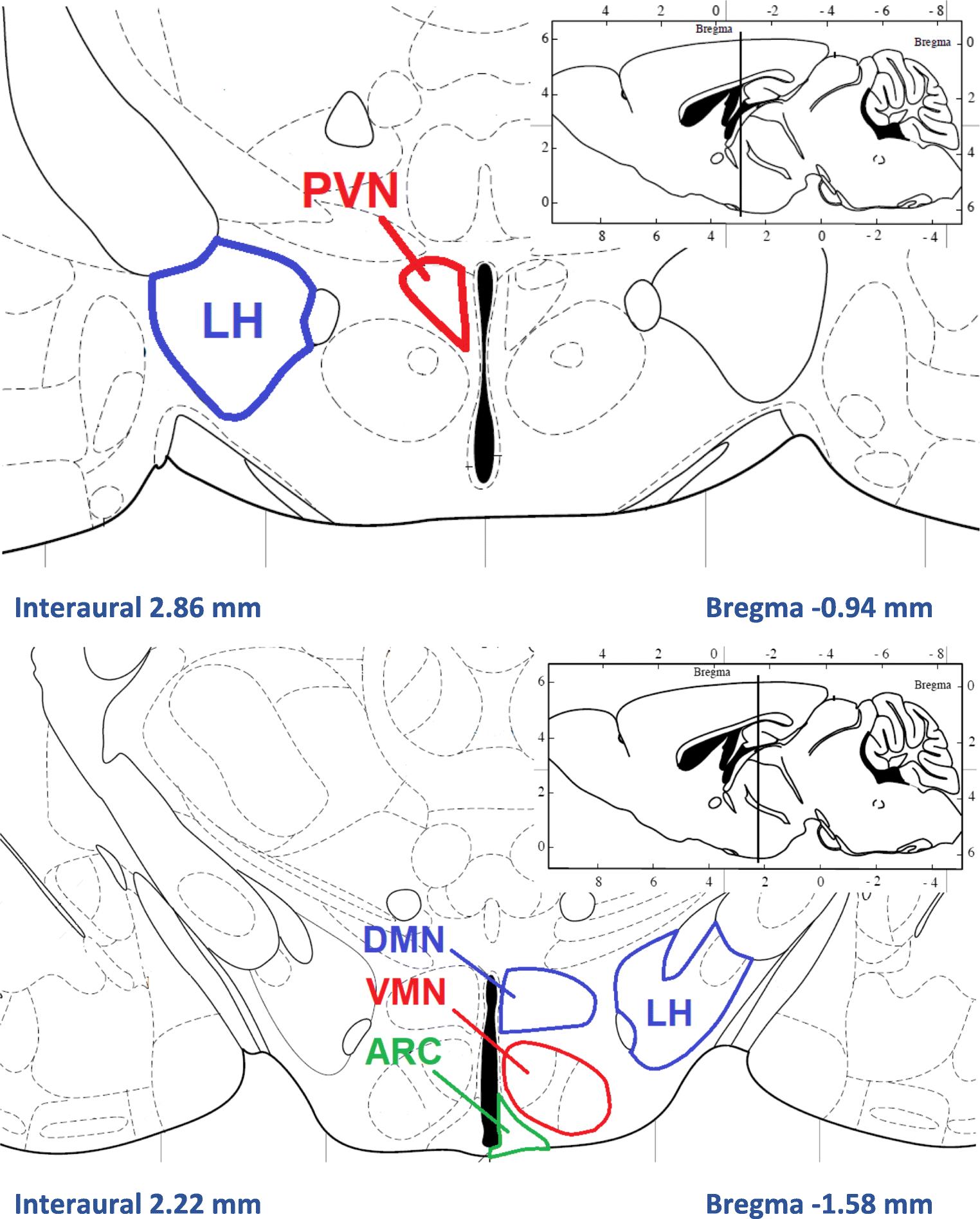 Brain Glucose Sensing Mechanism And Energy Homeostasis Springerlink Robbins Amp Myers Wiring Diagram Open Image In New Window