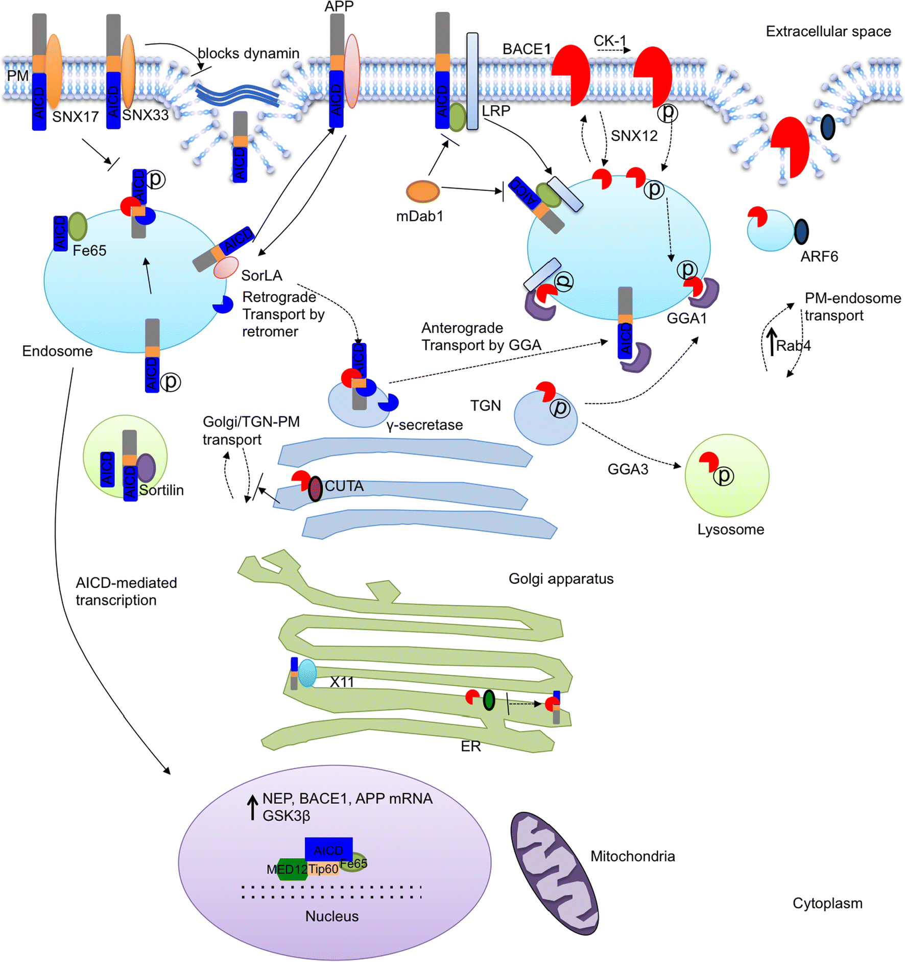 Cellular Trafficking Of Amyloid Precursor Protein In Amyloidogenesis Wasser Liquid Level Control Switch Ls 15 Open Image New Window
