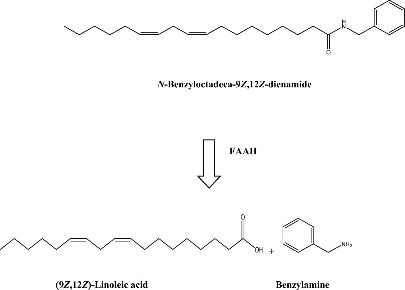 Inhibition of Fatty Acid Amide Hydrolase (FAAH) by Macamides