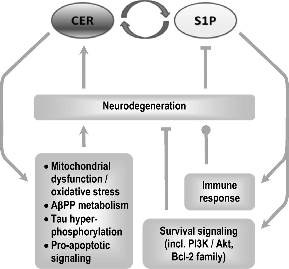 da5ba3feca9 The Cross-Talk Between Sphingolipids and Insulin-Like Growth Factor ...