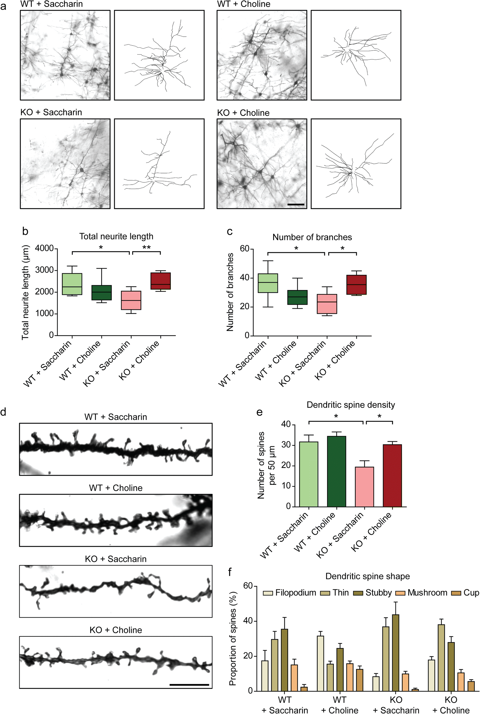 Choline Rescues Behavioural Deficits in a Mouse Model of Rett