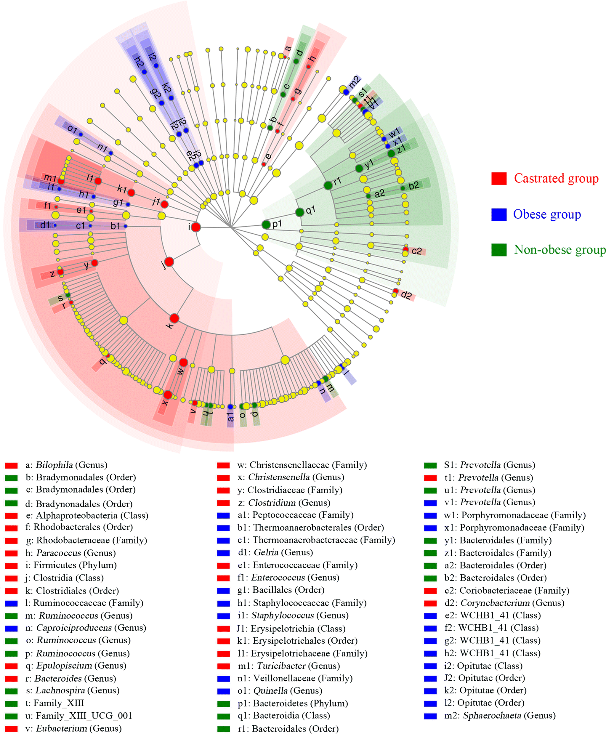 Different gut microbiome composition in obese Guizhou minipigs