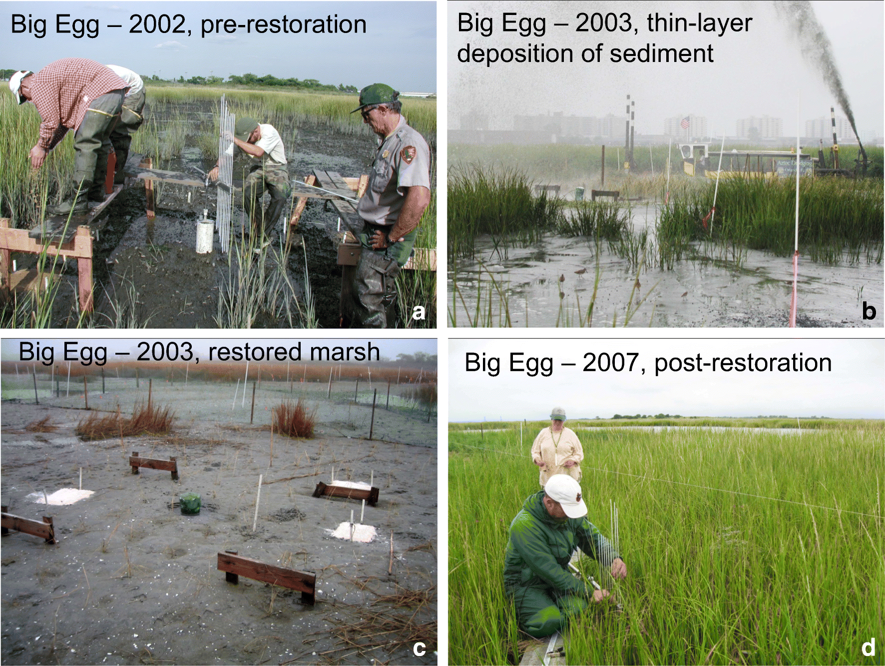 Signs Of Spring In Urban Wetland Little >> Evaluating The Relationship Among Wetland Vertical Development
