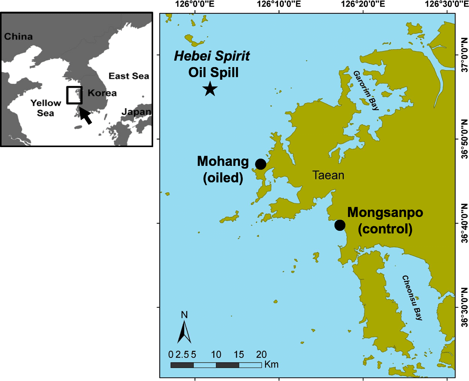 Effect of the Hebei Spirit Oil Spill on the Condition