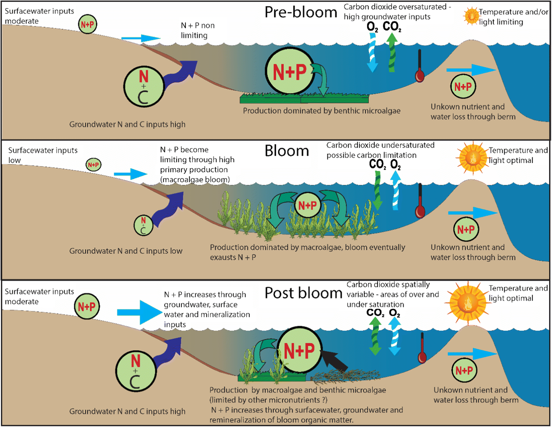 Hydrological Versus Biological Drivers of Nutrient and