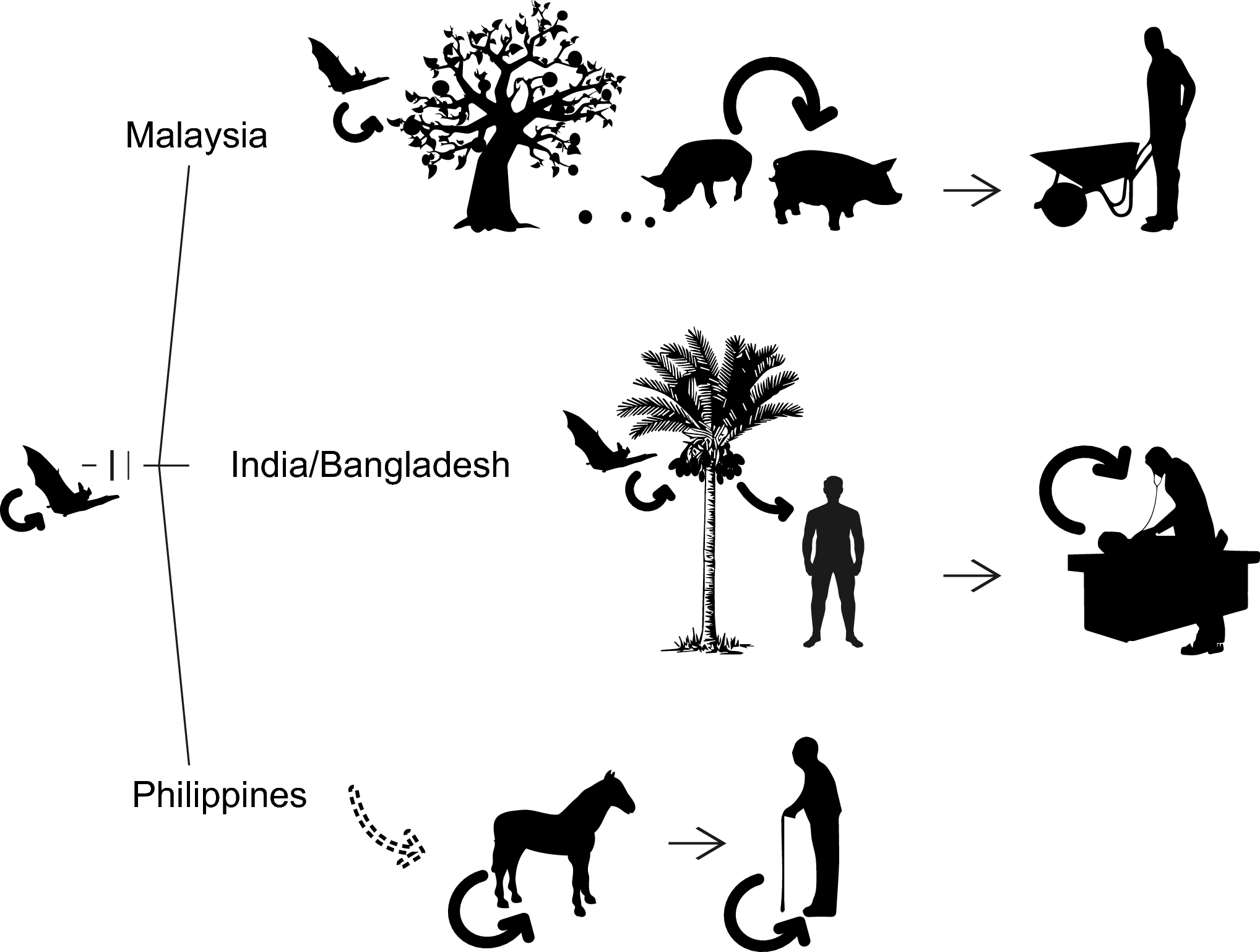 Phylogeography, Transmission, and Viral Proteins of Nipah