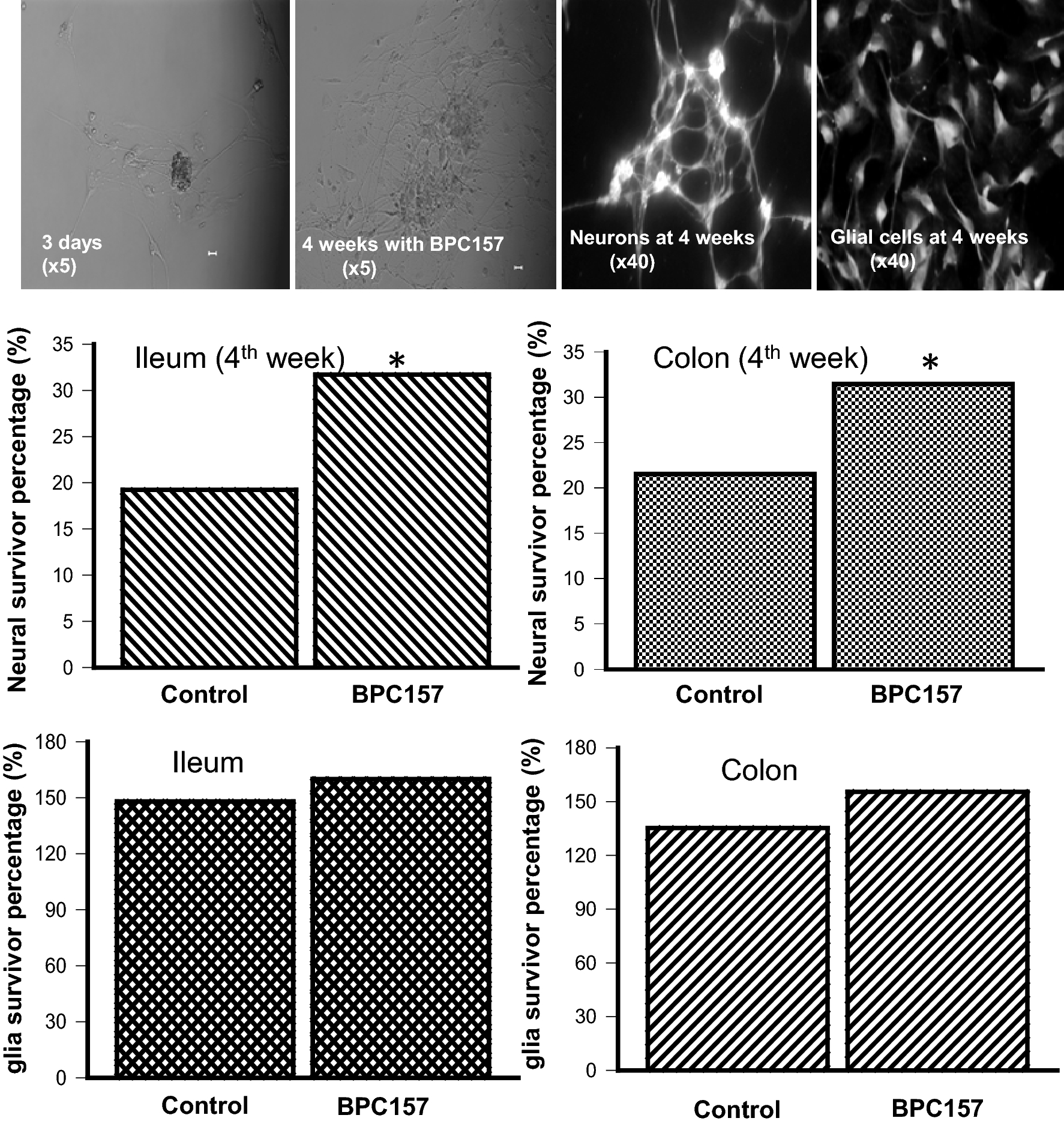 Cytoprotective Mechanism of the Novel Gastric Peptide BPC157 in