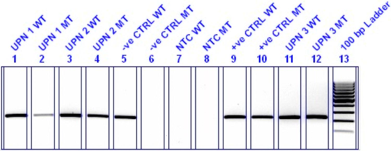 MYD88 and CXCR4 Mutation Profiling in Lymphoplasmacytic