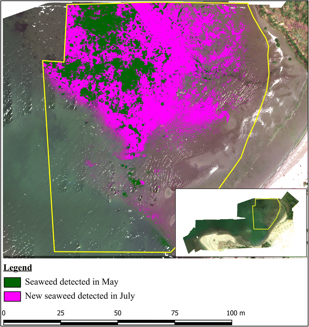 Multispectral UAV monitoring of submerged seaweed in shallow