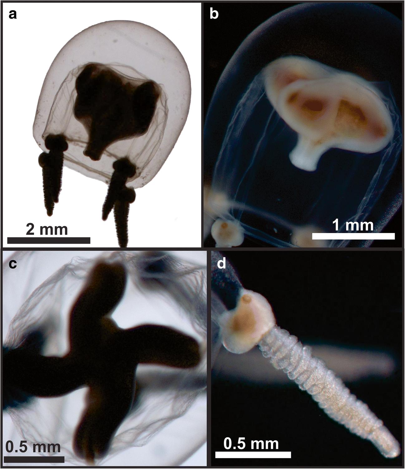 Diversity Of Gelatinous Zooplankton Cnidaria Ctenophora