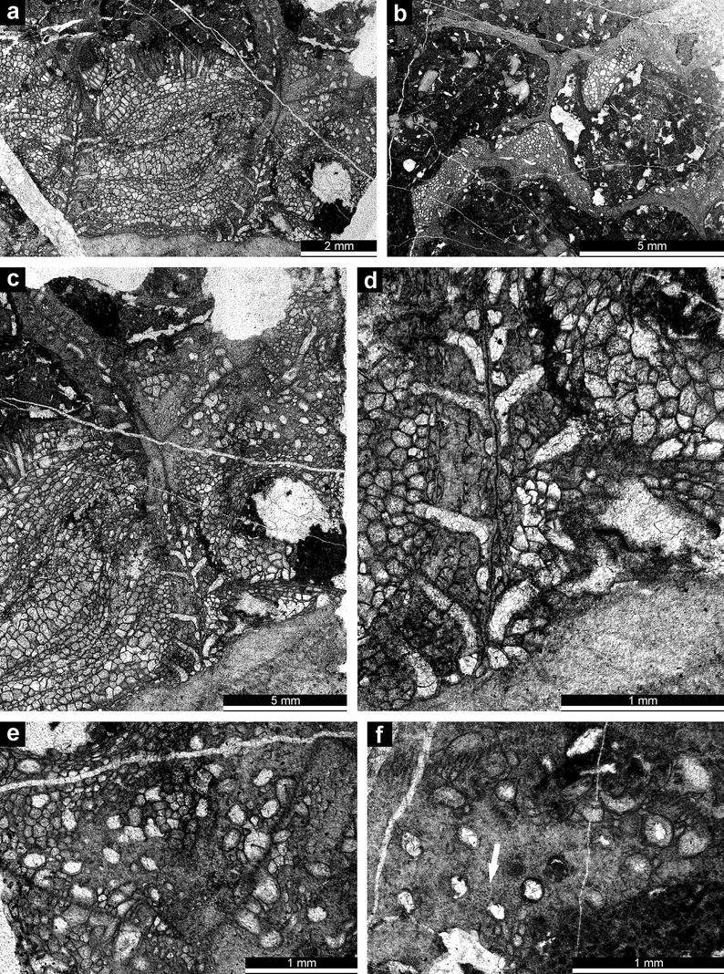 The cystoporate bryozoan Glyptopora michelinia (Prout, 1860) in the