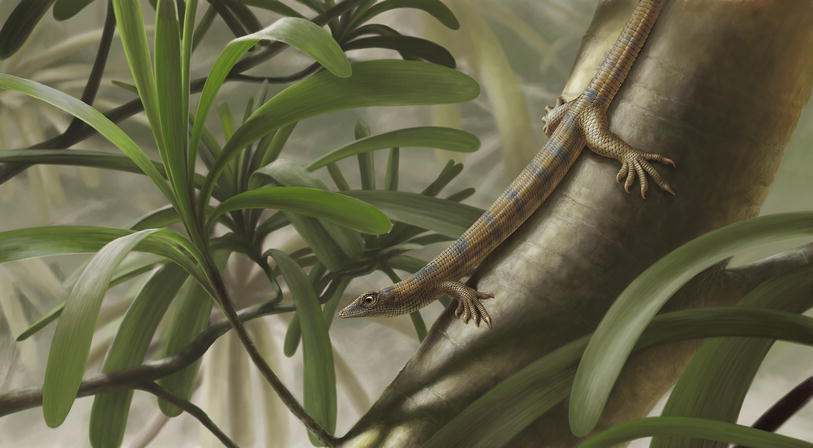First arboreal 'pelycosaurs' (Synapsida: Varanopidae) from