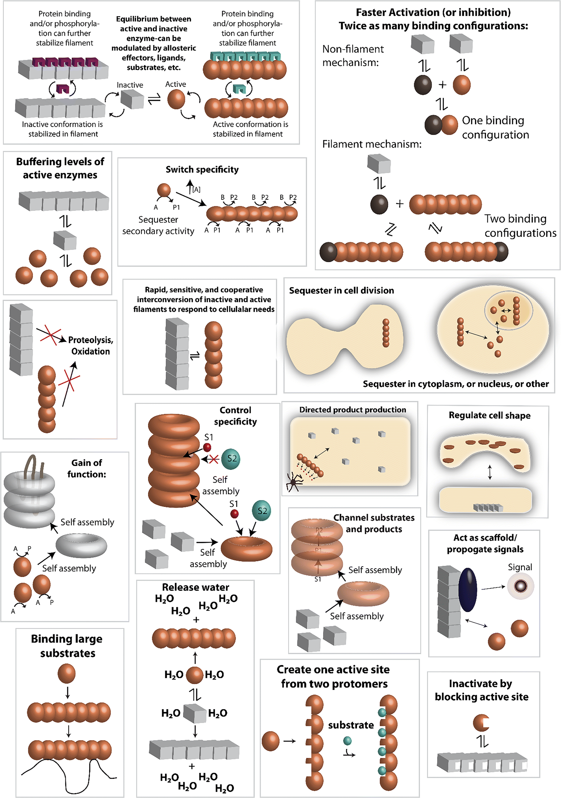 Structures, functions, and mechanisms of filament forming