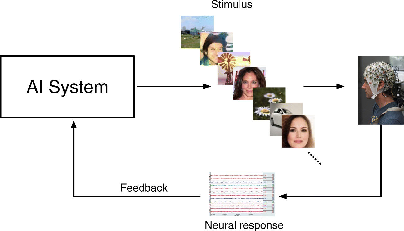 Use of Neural Signals to Evaluate the Quality of Generative