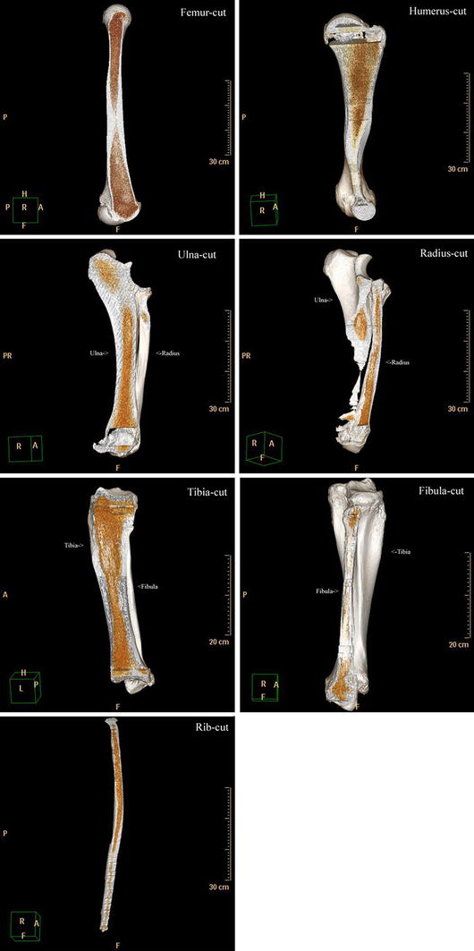 Anatomy, histology and elemental profile of long bones and ribs of ...