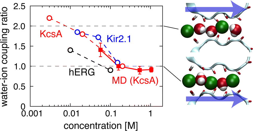 Queueing arrival and release mechanism for K+ permeation