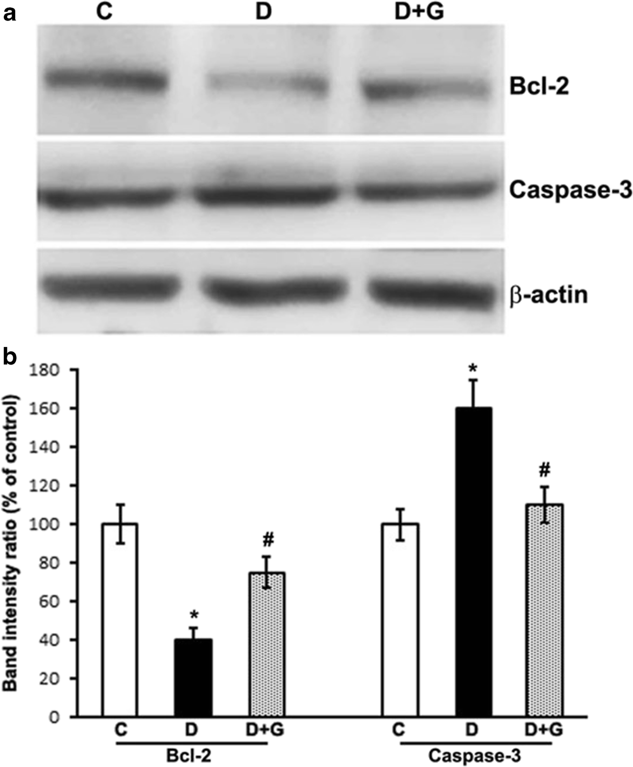 Gabapentin Attenuates Oxidative Stress and Apoptosis in the