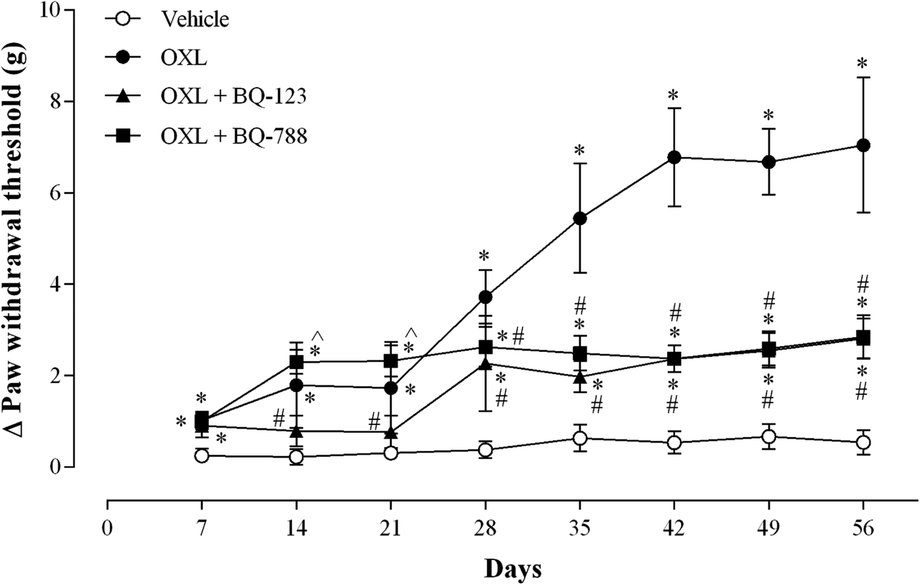 Involvement of Endothelin Receptors in Peripheral Sensory