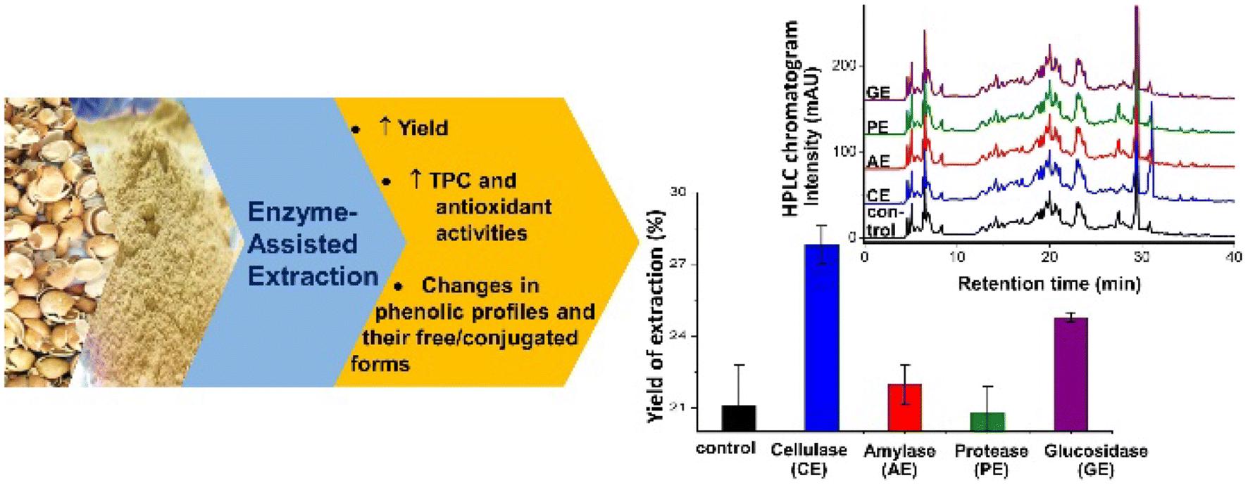 Improvement of Phenolic Contents and Antioxidant Activities