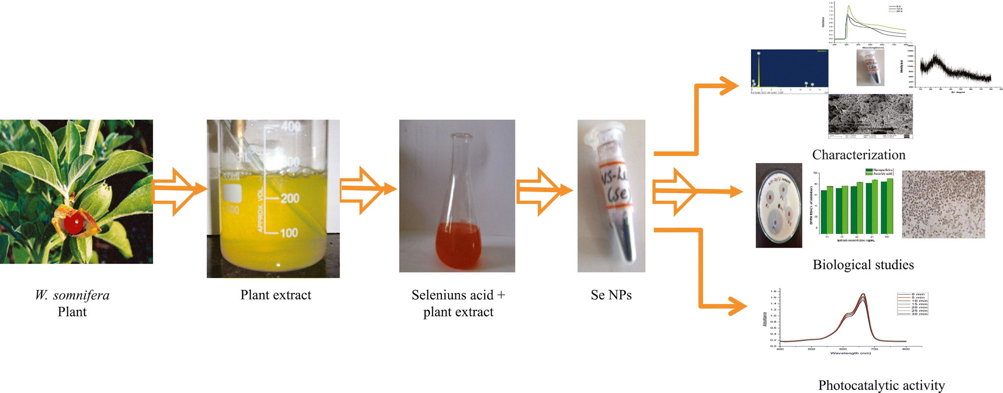 Green Synthesis of Selenium Nanoparticle Using Leaves