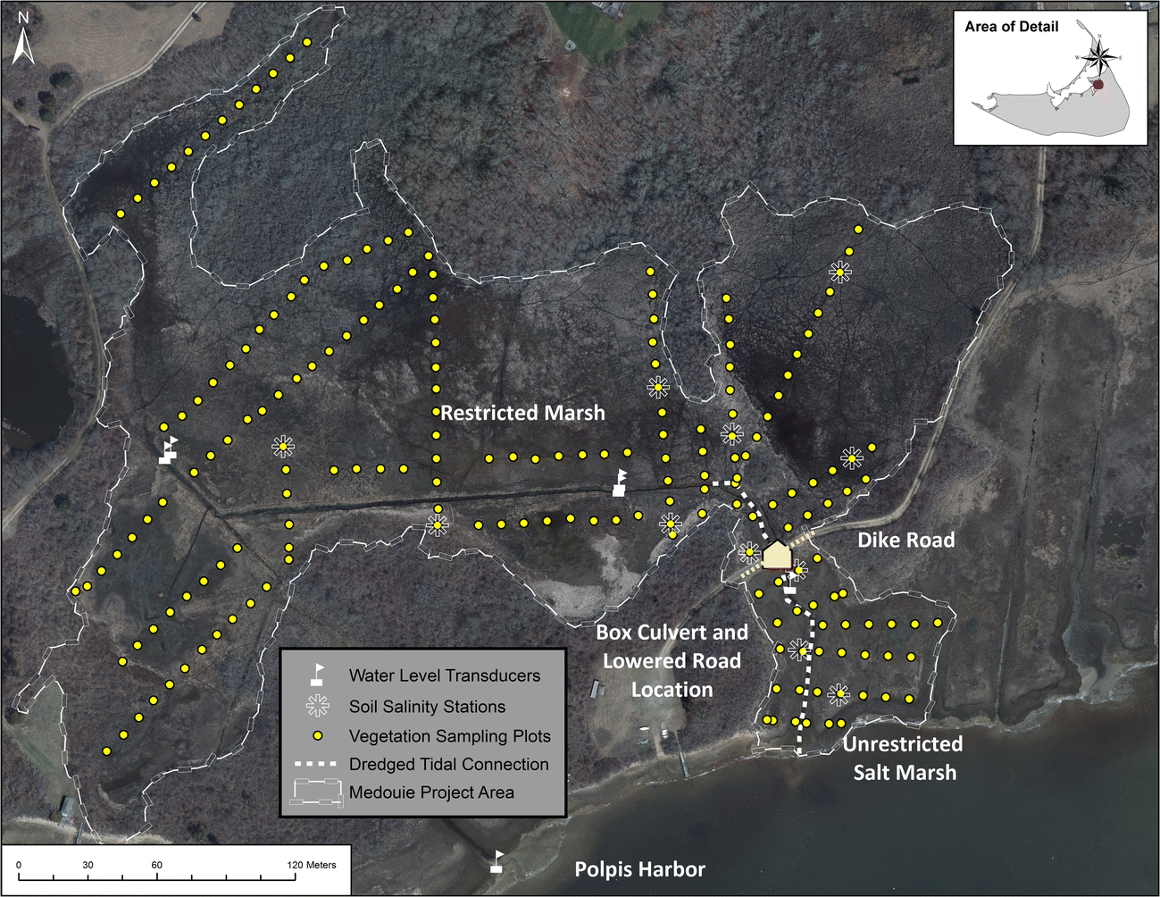 Tidal Hydrology and Salinity Drives Salt Marsh Vegetation