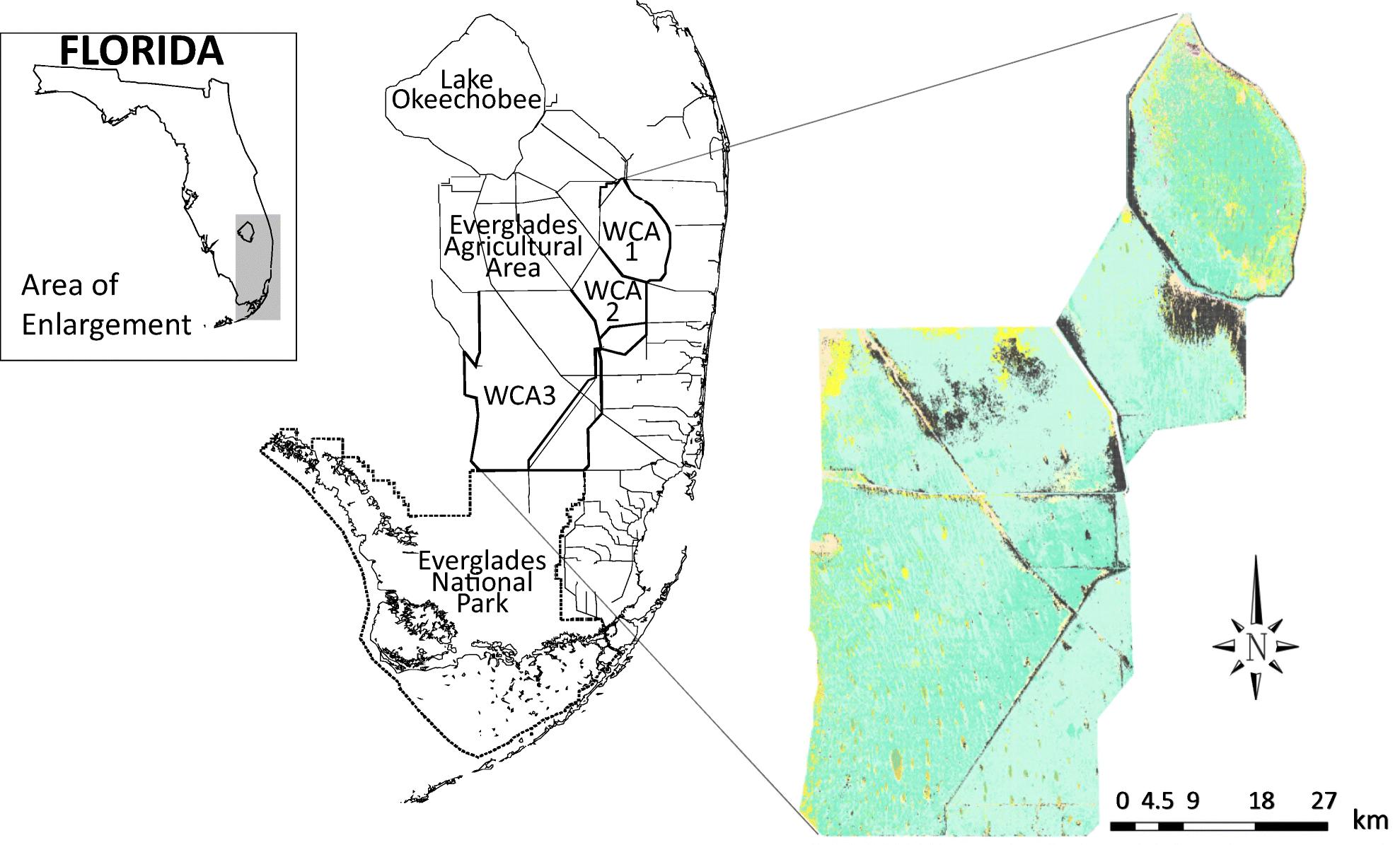 Typha (Cattail) Invasion in North American Wetlands: Biology