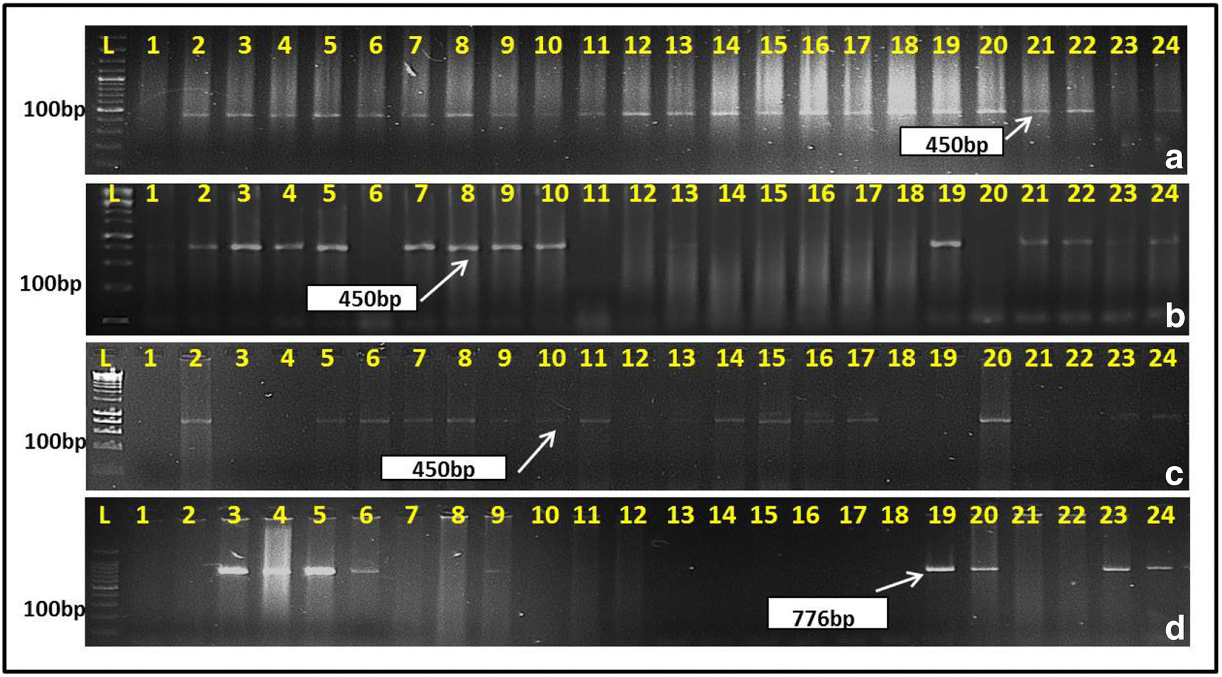 Marker-assisted transfer of PinaD1a gene to develop soft