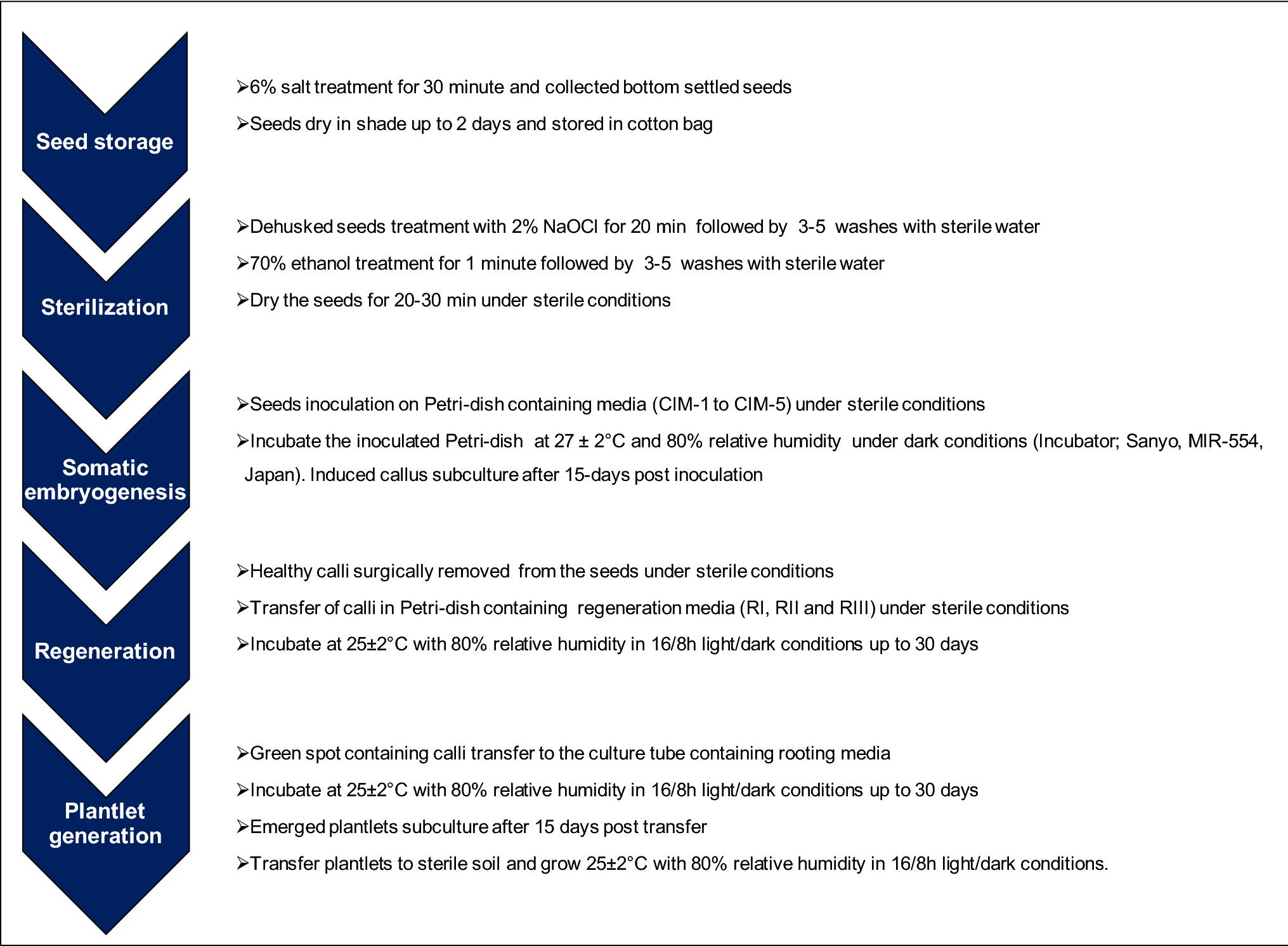 Optimization of in vitro culture media for improvement in