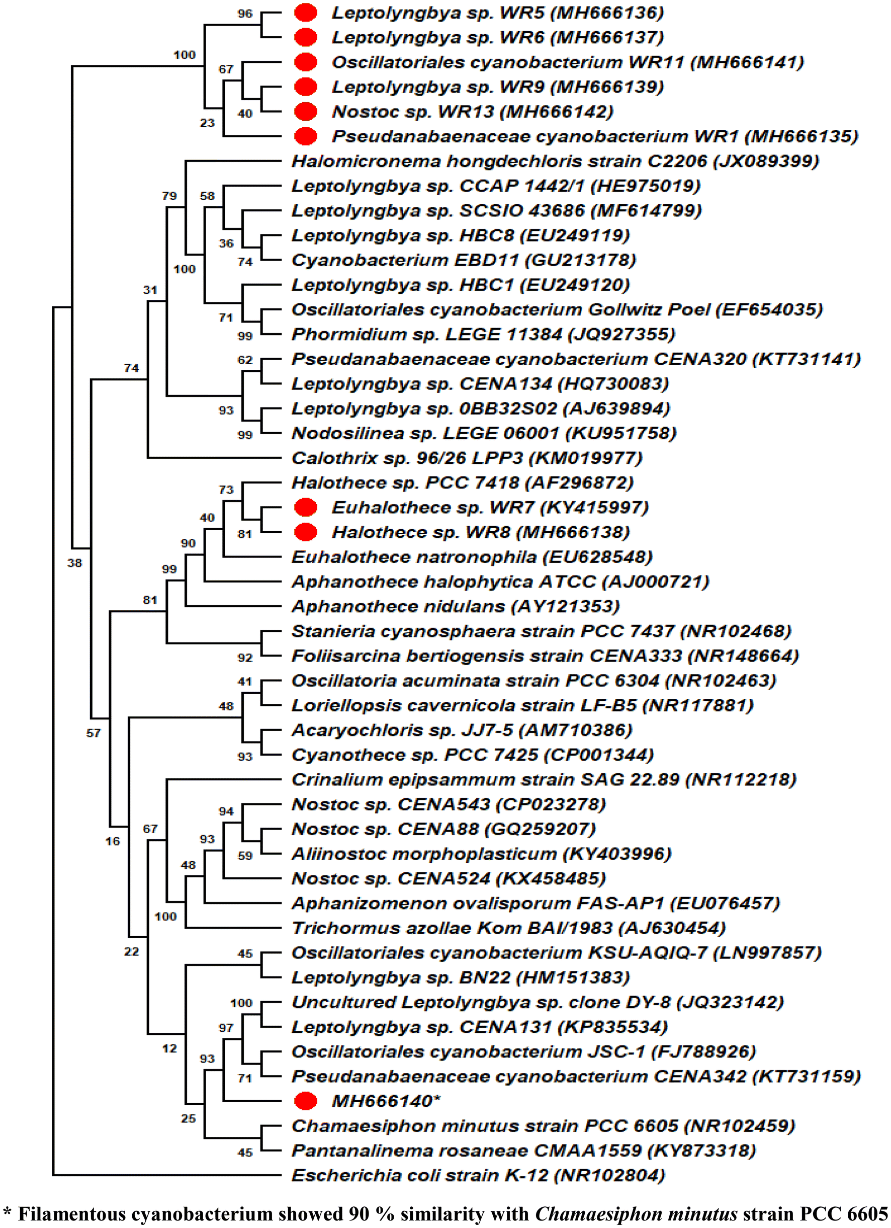 Cyanobacterial diversity in mat sample obtained from