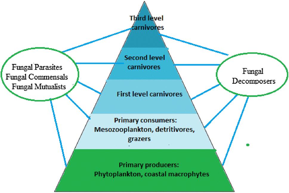 An online resource for marine fungi | SpringerLink