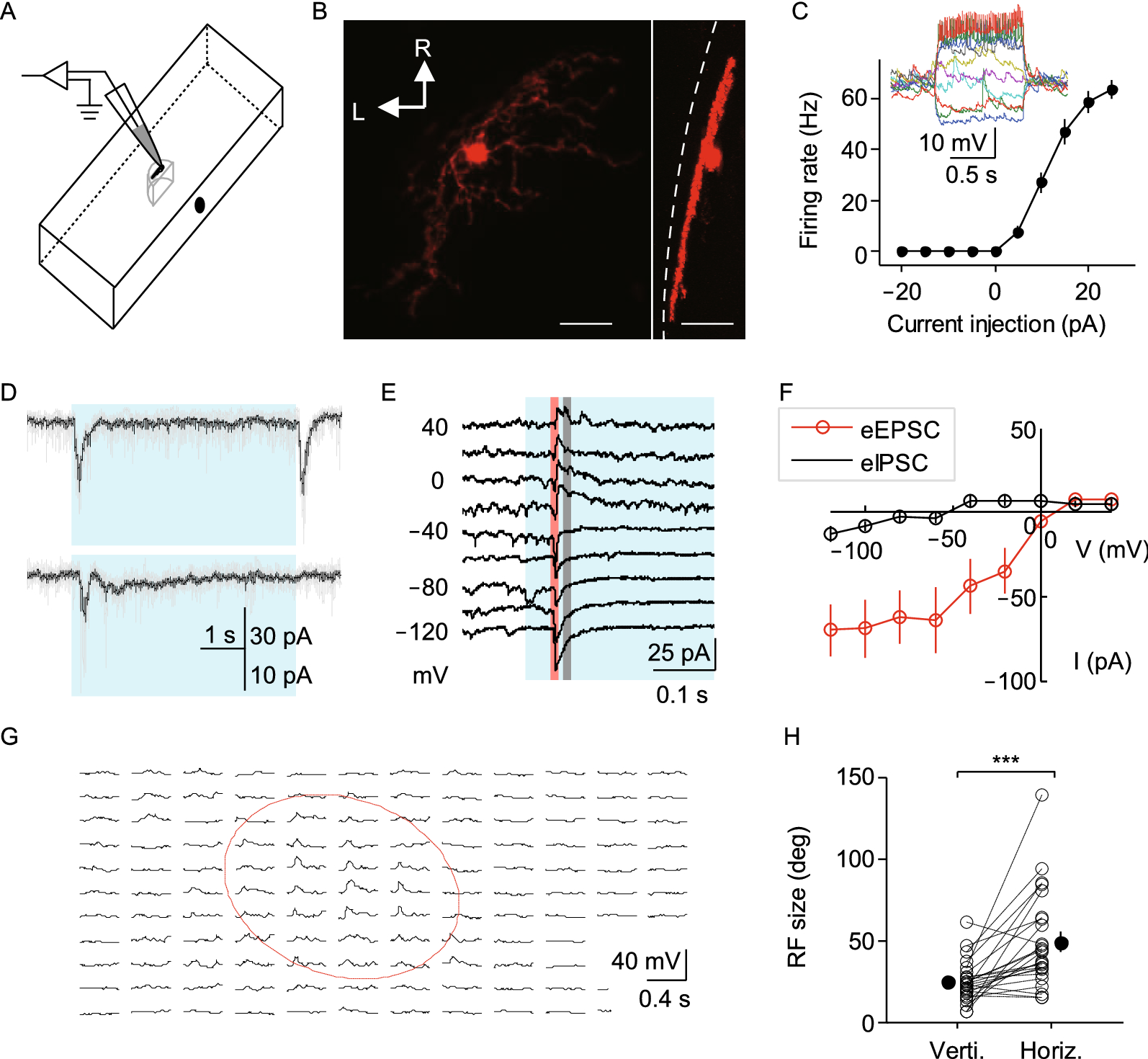 Optic Tectal Superficial Interneurons Detect Motion In Larval Simple 1 Amp Current Injector Circuit Diagram Circuits Lab Figure