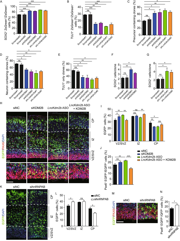 Long non-coding RNA Lnc Kdm2b regulates cortical neuronal