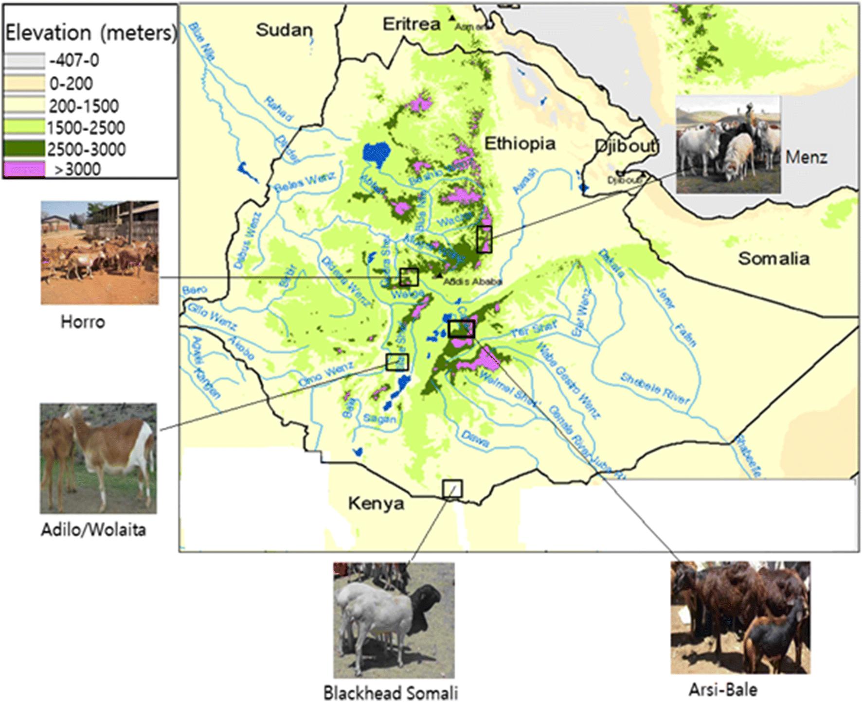 Genomic signatures of high-altitude adaptation in Ethiopian