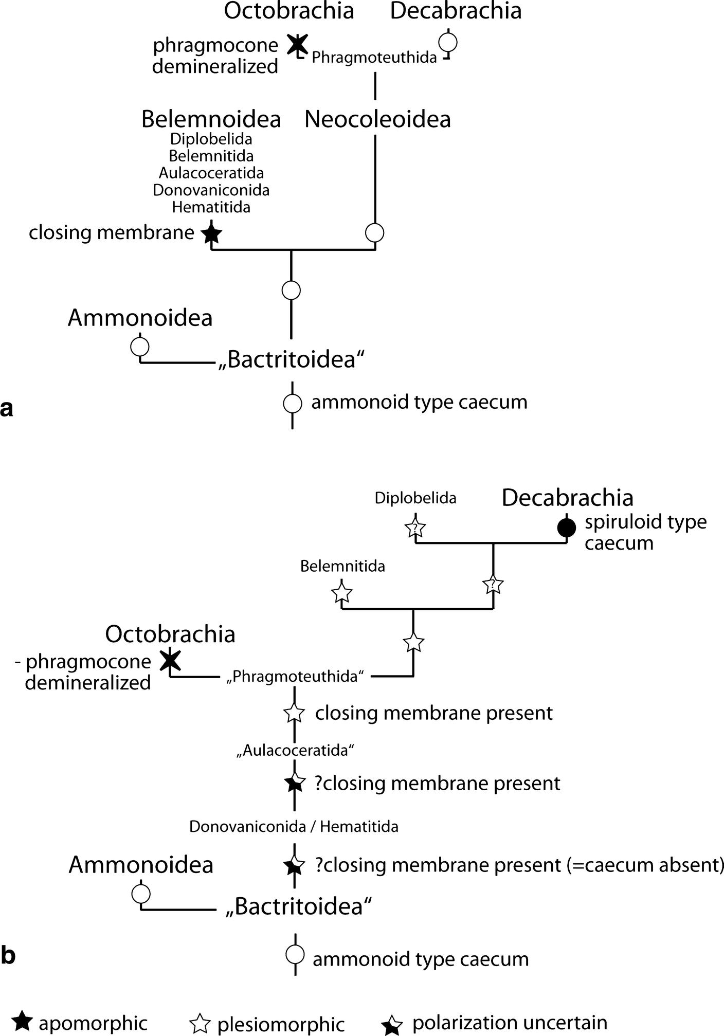 39433c14329793 Homology problems in cephalopod morphology  deceptive (dis ...