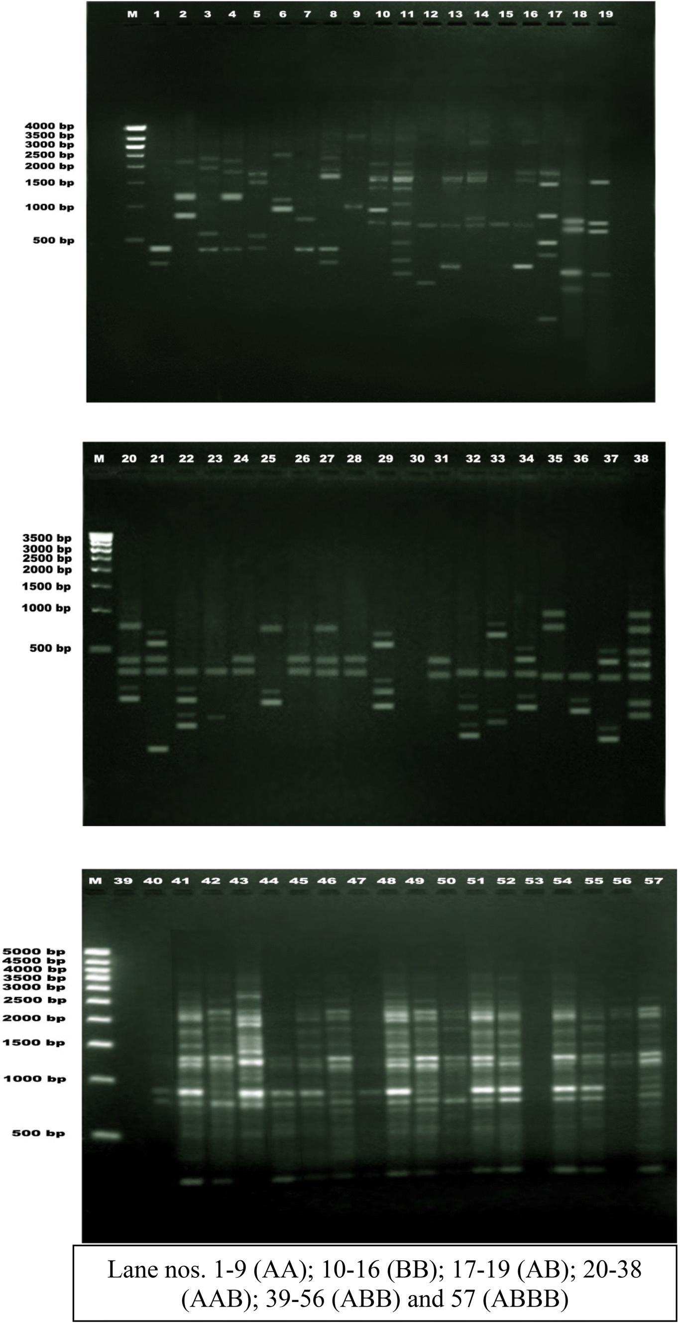 Inter retrotransposon based genetic diversity and